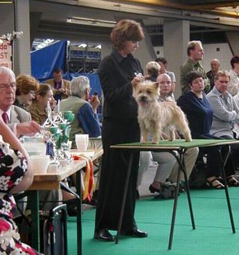 Ziggy at the World Show 2002